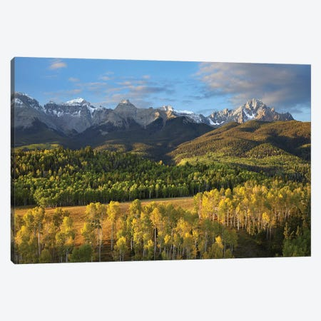 Quaking Aspen Forest And Mount Sneffels, San Juan Mountains, Colorado Canvas Print #TFI825} by Tim Fitzharris Canvas Art Print