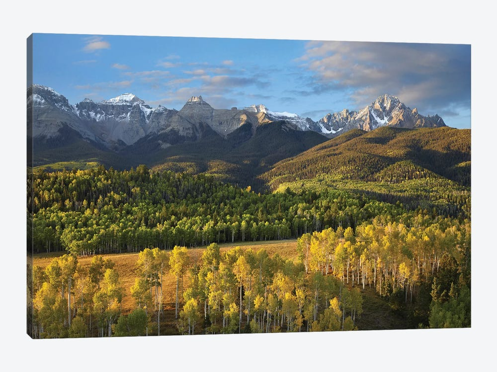 Quaking Aspen Forest And Mount Sneffels, San Juan Mountains, Colorado by Tim Fitzharris 1-piece Canvas Wall Art