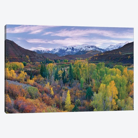 Quaking Aspen Forest In Autumn, Snowmass Mountain Near Quaking Aspen, Colorado Canvas Print #TFI828} by Tim Fitzharris Canvas Art