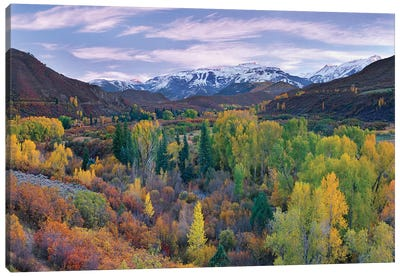 Quaking Aspen Forest In Autumn, Snowmass Mountain Near Quaking Aspen, Colorado Canvas Art Print