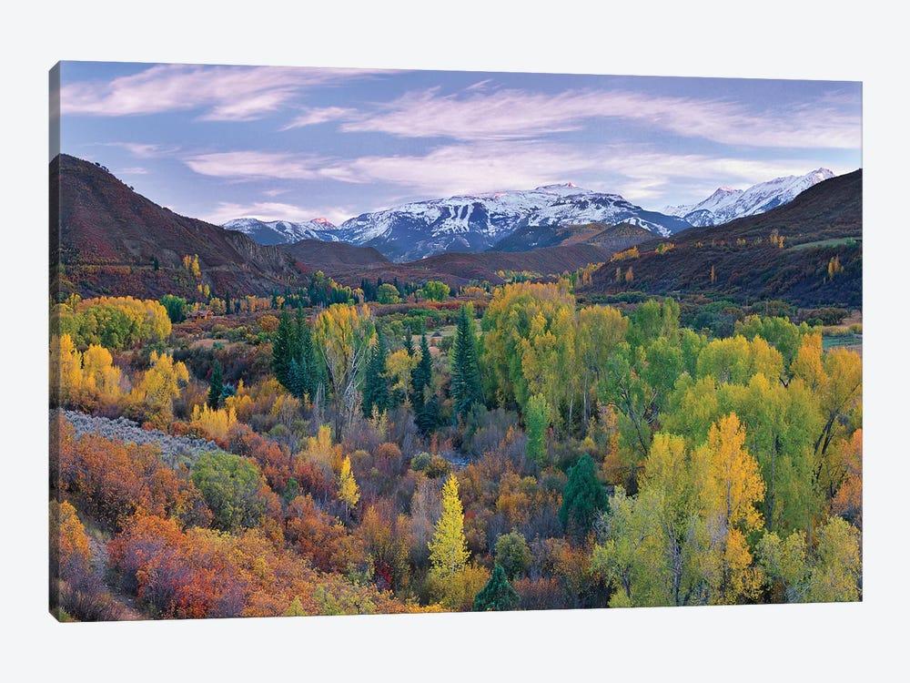 Quaking Aspen Forest In Autumn, Snowmass Mountain Near Quaking Aspen, Colorado by Tim Fitzharris 1-piece Art Print