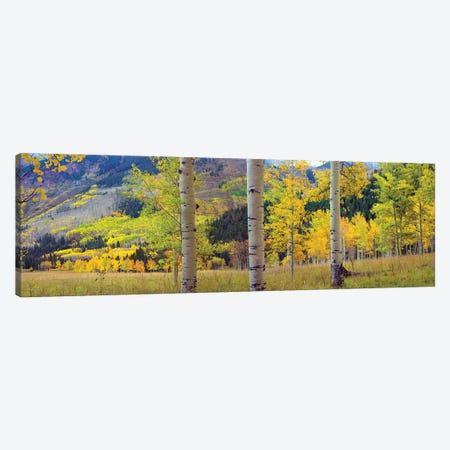 Quaking Aspen Grove In Autumn, Colorado Canvas Print #TFI832} by Tim Fitzharris Canvas Art Print