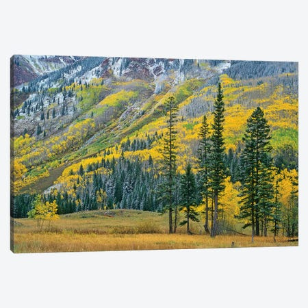 Quaking Aspen Grove In Fall Colors, Maroon Bells, Snowmass Wilderness, Colorado II Canvas Print #TFI835} by Tim Fitzharris Canvas Art
