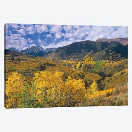 Quaking Aspen In Autumn, Colorado I Canvas Print #TFI837} by Tim Fitzharris Canvas Wall Art
