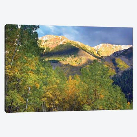 Quaking Aspen Trees And Highland Peak, Colorado Canvas Print #TFI840} by Tim Fitzharris Canvas Wall Art