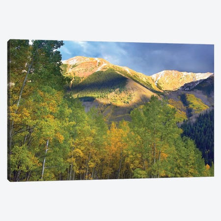 Quaking Aspen Trees And Highland Peak, Colorado Canvas Print #TFI840} by Tim Fitzharris Canvas Wall Art