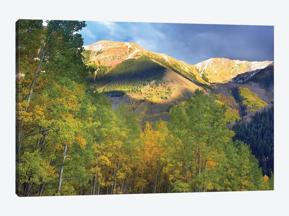 Quaking Aspen Trees And Highland Peak, Colorado by Tim Fitzharris 1-piece Canvas Art Print