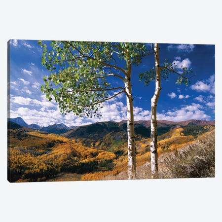 Quaking Aspen Trees In Fall-Colors On Elk Mountains, Capitol Creek Trailhead, Colorado Canvas Print #TFI848} by Tim Fitzharris Canvas Artwork
