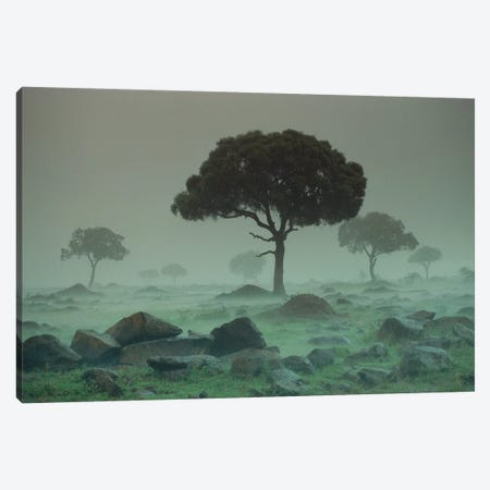 Rain Storm On The Serengeti Plains, Kenya Canvas Print #TFI854} by Tim Fitzharris Canvas Art