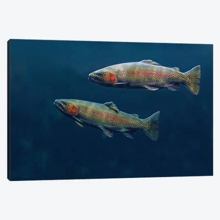 Rainbow Trout Pair Swimming Underwater Canvas Print #TFI859} by Tim Fitzharris Canvas Print