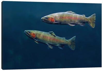 Rainbow Trout Pair Swimming Underwater Canvas Art Print