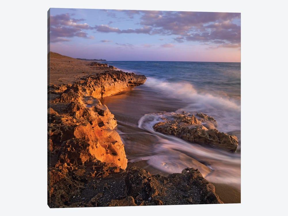 Beach At Dusk, Blowing Rocks Preserve, Florida by Tim Fitzharris 1-piece Art Print