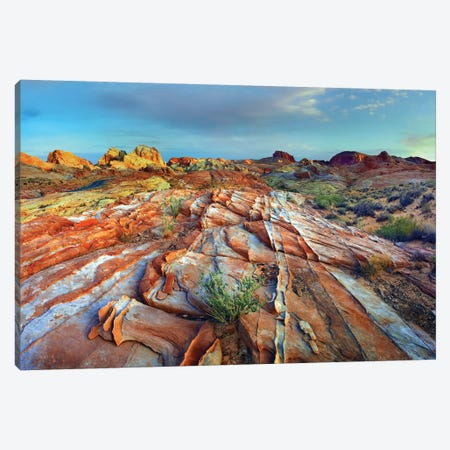 Rainbow Vista, Valley Of Fire State Park, Nevada Canvas Print #TFI860} by Tim Fitzharris Canvas Artwork