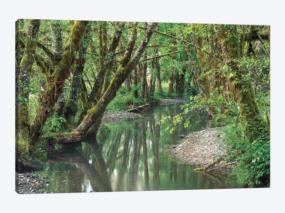 Red Alder Trees With Moss, Hoh Rainforest, Olympic National Park, Washington by Tim Fitzharris 1-piece Canvas Wall Art
