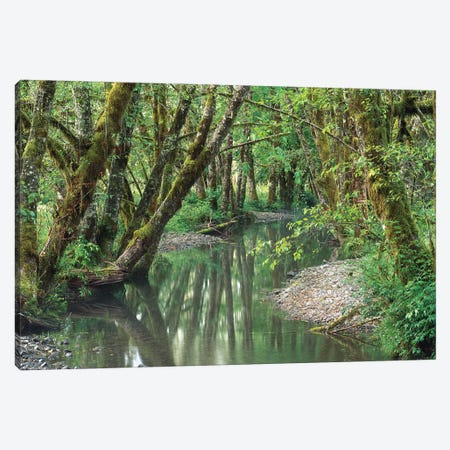 Red Alder Trees With Moss, Hoh Rainforest, Olympic National Park, Washington Canvas Print #TFI863} by Tim Fitzharris Canvas Art