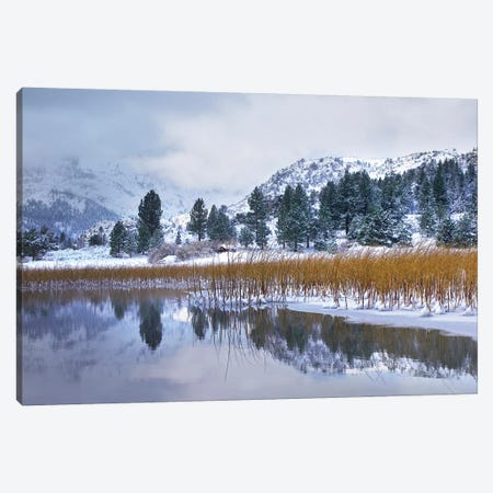 Reeds Growing Through Frozen Surface Of June Lake, Eastern Sierra Nevada, California Canvas Print #TFI876} by Tim Fitzharris Canvas Wall Art