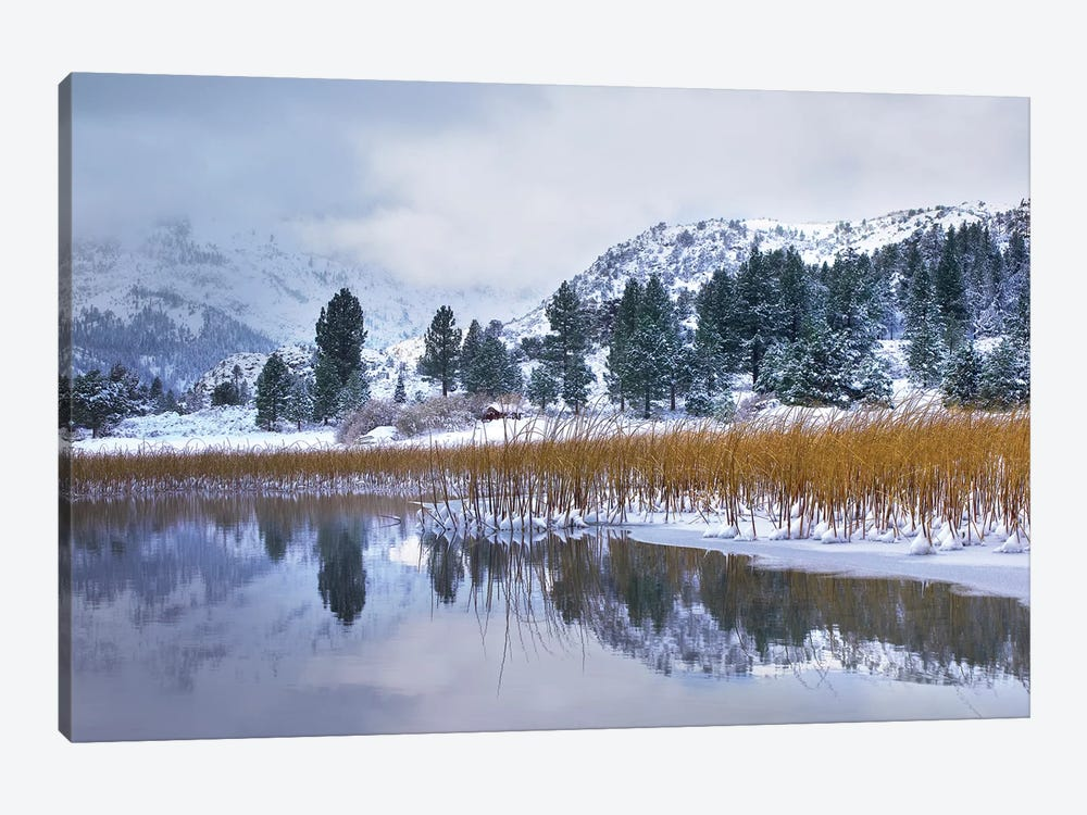 Reeds Growing Through Frozen Surface Of June Lake, Eastern Sierra Nevada, California by Tim Fitzharris 1-piece Canvas Wall Art