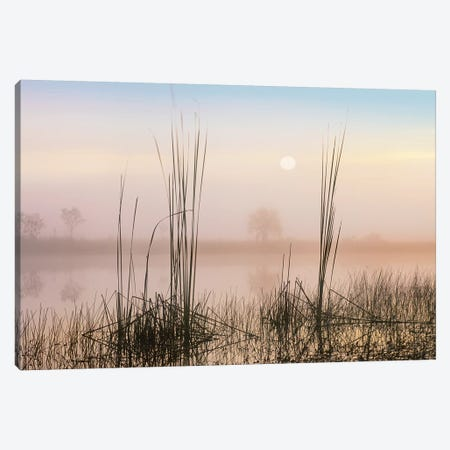 Reeds In Sweet Bay Pond, Everglades National Park, Florida Canvas Print #TFI877} by Tim Fitzharris Canvas Artwork