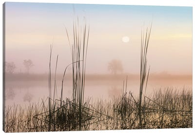 Reeds In Sweet Bay Pond, Everglades National Park, Florida Canvas Art Print