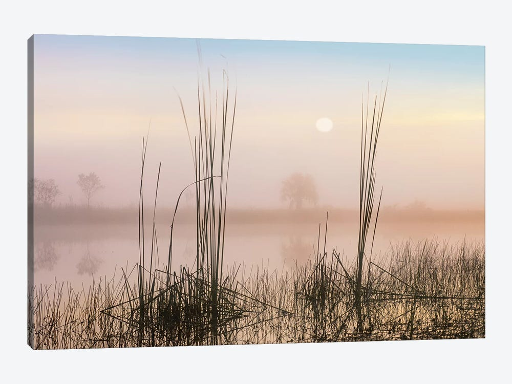 Reeds In Sweet Bay Pond, Everglades National Park, Florida by Tim Fitzharris 1-piece Canvas Art Print