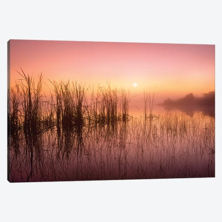 Reeds Reflected In Sweet Bay Pond At Sunrise, Everglades National Park, Florida Canvas Print #TFI878} by Tim Fitzharris Art Print