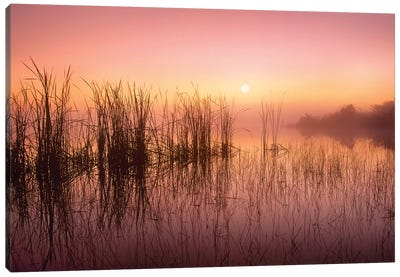 Reeds Reflected In Sweet Bay Pond At Sunrise, Everglades National Park, Florida Canvas Art Print