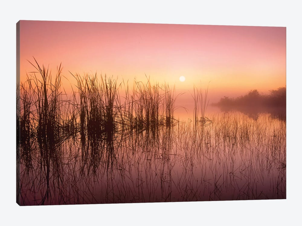 Reeds Reflected In Sweet Bay Pond At Sunrise, Everglades National Park, Florida 1-piece Canvas Wall Art