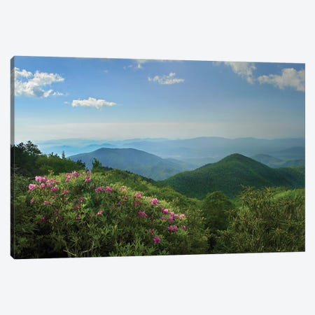 Rhododendron Tree Flowering At Craggy Gardens, Blue Ridge Parkway, North Carolina 3-Piece Canvas #TFI883} by Tim Fitzharris Canvas Art