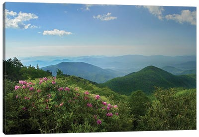 Rhododendron Tree Flowering At Craggy Gardens, Blue Ridge Parkway, North Carolina Canvas Art Print