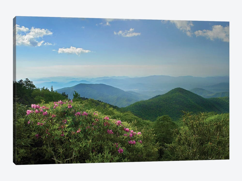 Rhododendron Tree Flowering At Craggy Gardens, Blue Ridge Parkway, North Carolina by Tim Fitzharris 1-piece Canvas Art