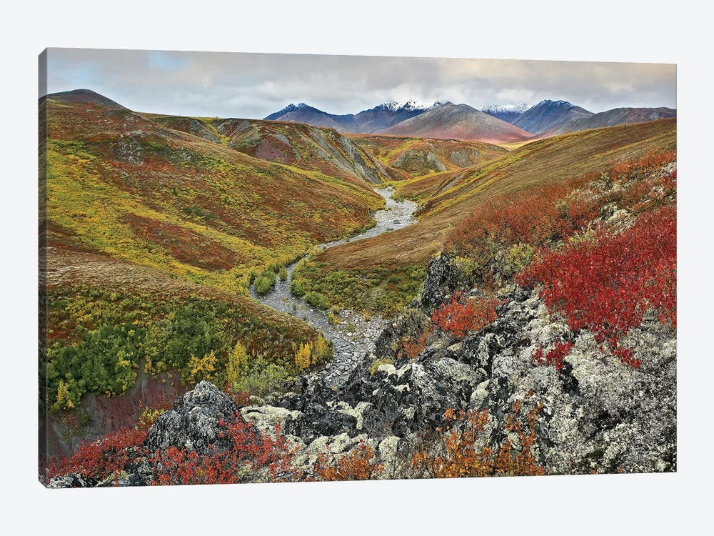 River Flowing Through Tundra, Ogilvie Mountains, Tombstone Territorial Park, Yukon, Canada by Tim Fitzharris 1-piece Canvas Artwork