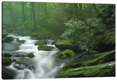 Roaring Fork River Flowing Through Forest In Great Smoky Mountains National Park, Tennessee Canvas Art Print