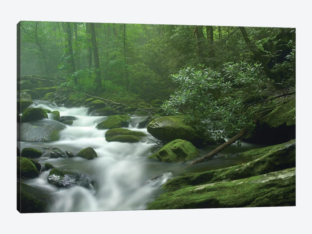 Roaring Fork River Flowing Through Forest In Great Smoky Mountains National Park, Tennessee by Tim Fitzharris 1-piece Canvas Print