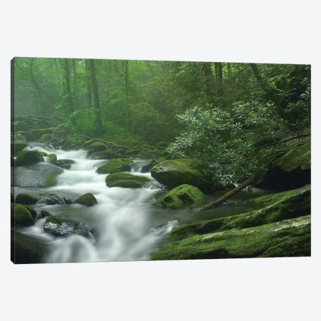 Roaring Fork River Flowing Through Forest In Great Smoky Mountains National Park, Tennessee Canvas Print #TFI891} by Tim Fitzharris Canvas Print