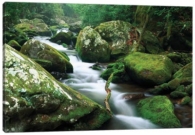 Roaring Fork River, Great Smoky Mountains National Park, Tennessee Canvas Art Print