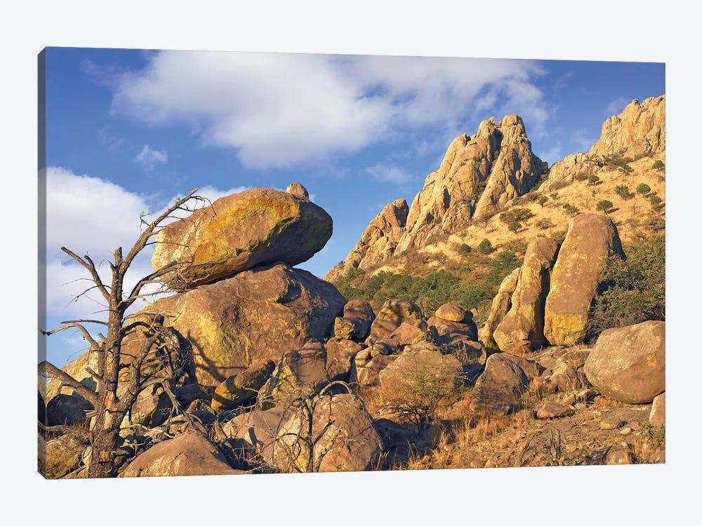 Rockpile, Davis Mountains, Chihuahuan Desert, Texas II by Tim Fitzharris 1-piece Canvas Artwork