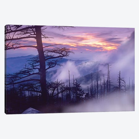 Rolling Fog On Clingman's Dome, Great Smoky Mountains National Park, Tennessee Canvas Print #TFI906} by Tim Fitzharris Canvas Art