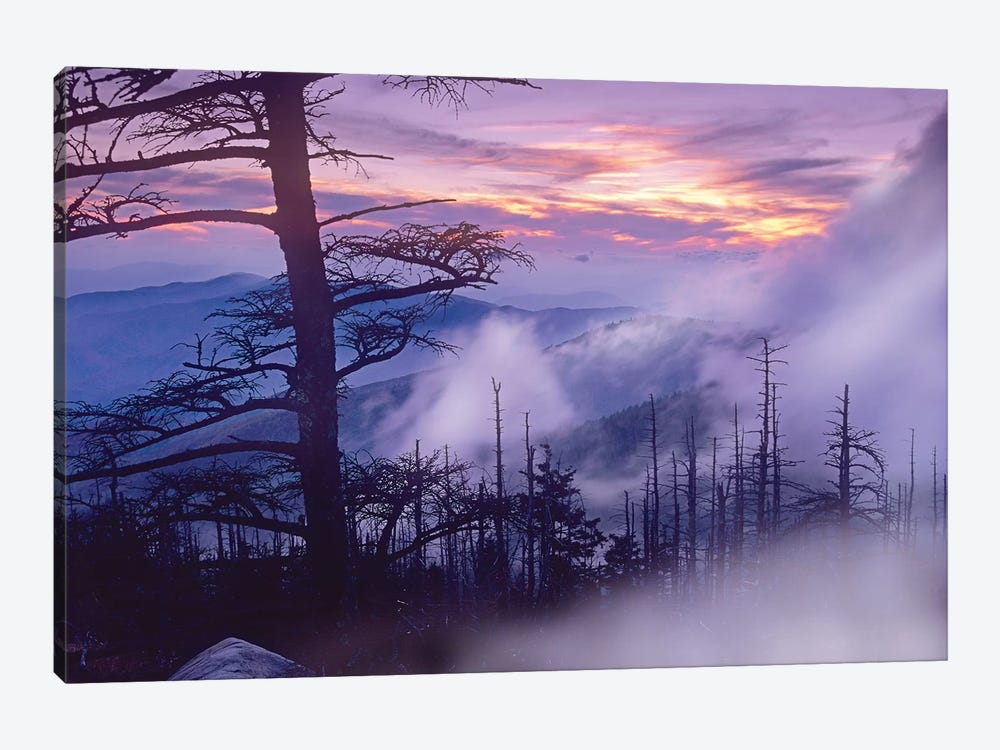 Rolling Fog On Clingman's Dome, Great Smoky Mountains National Park, Tennessee by Tim Fitzharris 1-piece Canvas Art