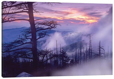 Rolling Fog On Clingman's Dome, Great Smoky Mountains National Park, Tennessee Canvas Art Print