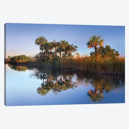 Royal Palm Trees And Reeds Along Waterway, Fakahatchee State Preserve, Florida Canvas Print #TFI909} by Tim Fitzharris Canvas Print