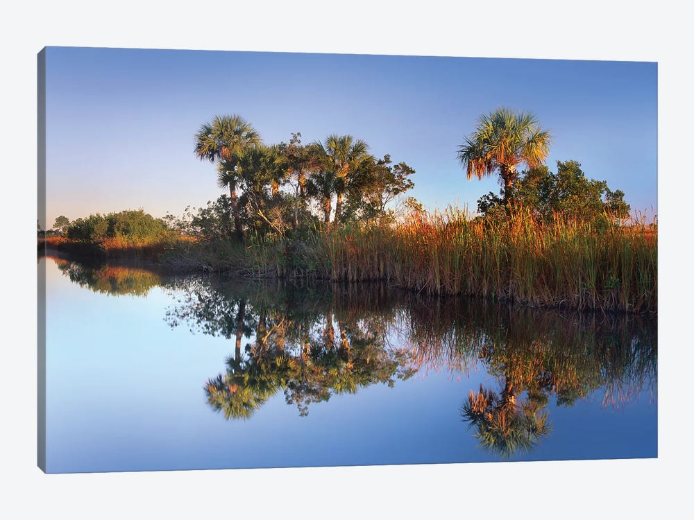 Royal Palm Trees And Reeds Along Waterway, Fakahatchee State Preserve, Florida by Tim Fitzharris 1-piece Canvas Print