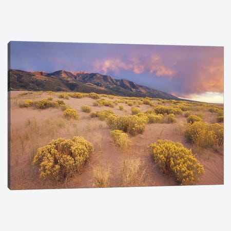 Sagewort On Sand Dune, Sangre De Cristo Mountains, Great Sand Dunes National Monument, Colorado Canvas Print #TFI923} by Tim Fitzharris Canvas Art Print