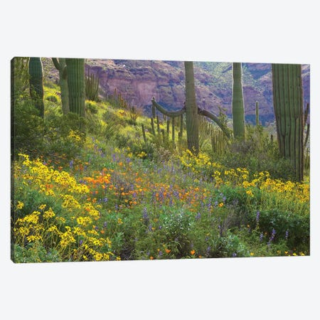 Saguaro Amid Flowering Lupine, California Brittlebush, Organ Pipe Cactus National Monument, Arizona And Desert Golden Poppies I Canvas Print #TFI924} by Tim Fitzharris Canvas Wall Art