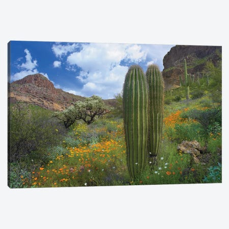 Saguaro Amid Flowering Lupine, California Brittlebush, Organ Pipe Cactus National Monument, Arizona And Desert Golden Poppies II Canvas Print #TFI925} by Tim Fitzharris Canvas Wall Art