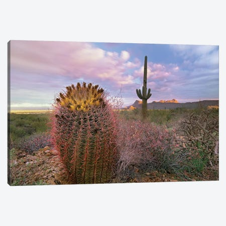 Saguaro And Giant Barrel Cactus With Panther And Safford Peaks In Distance, Saguaro National Park, Arizona Canvas Print #TFI927} by Tim Fitzharris Canvas Artwork