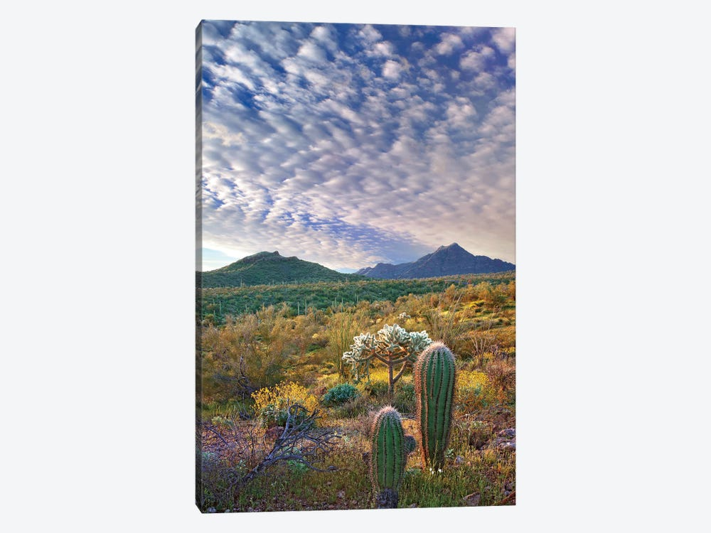 Saguaro And Teddybear Cholla, Arizona Amid Flowering Lupine And California Brittlebush II by Tim Fitzharris 1-piece Art Print