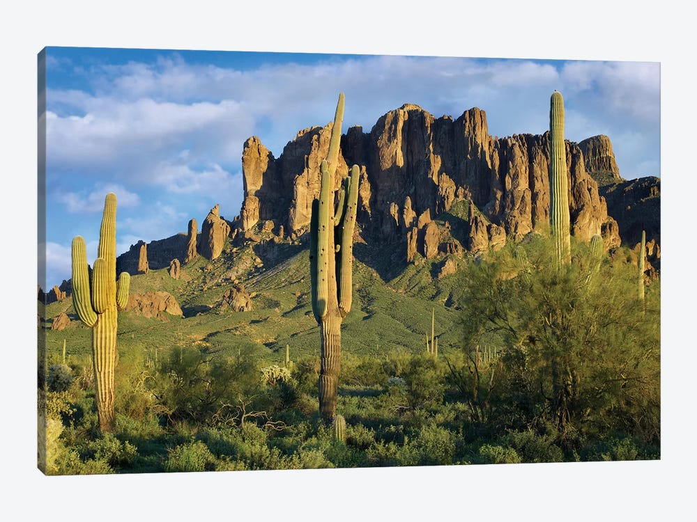 Saguaro Cacti And Superstition Mountains, Lost Dutchman State Park, Arizona I by Tim Fitzharris 1-piece Canvas Wall Art