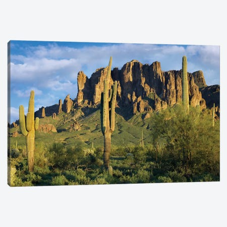 Saguaro Cacti And Superstition Mountains, Lost Dutchman State Park, Arizona I Canvas Print #TFI933} by Tim Fitzharris Canvas Art