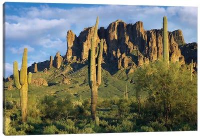 Saguaro Cacti And Superstition Mountains, Lost Dutchman State Park, Arizona I Canvas Art Print