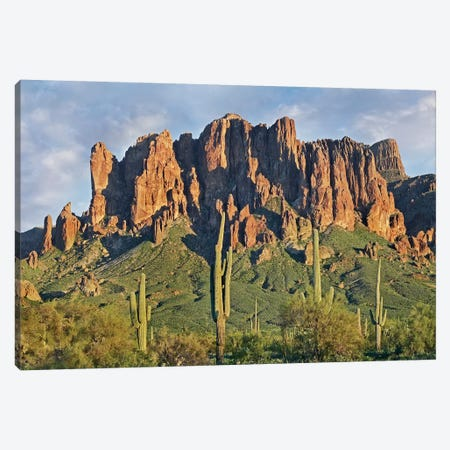 Saguaro Cacti And Superstition Mountains, Lost Dutchman State Park, Arizona II Canvas Print #TFI934} by Tim Fitzharris Canvas Print